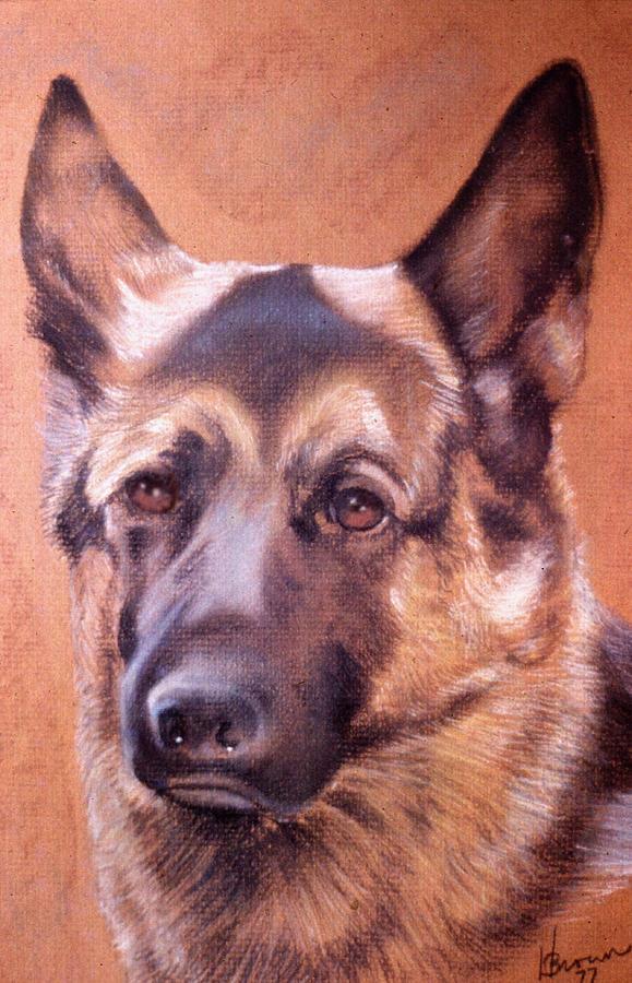 Dog Portrait Pastel - Shepard by Harvie Brown