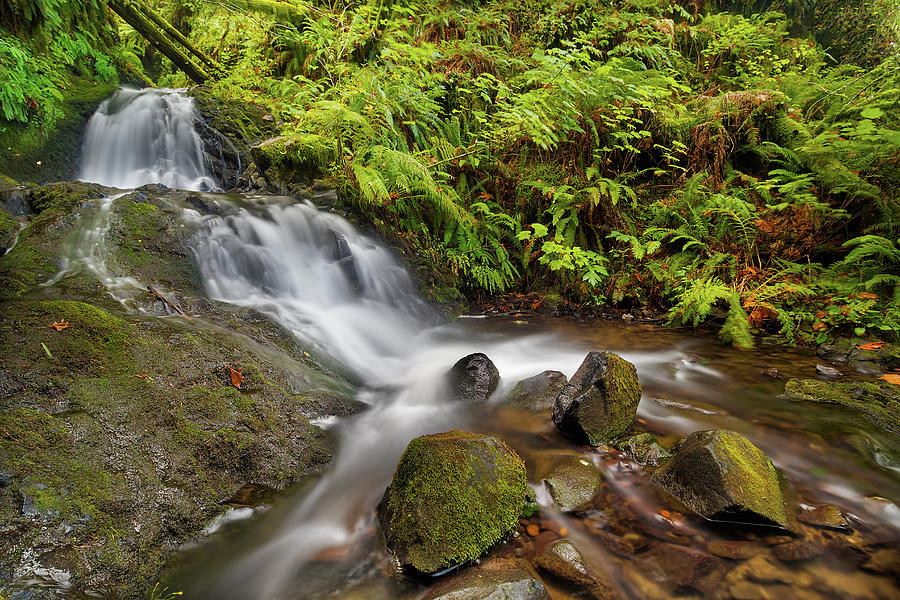 Waterfall Photograph - Shepperds Dell Falls by David Gn