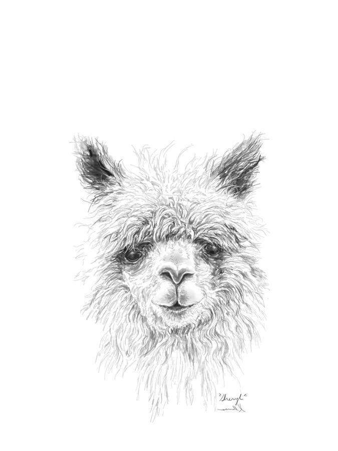 Animal Drawing - Sheryl by K Llamas