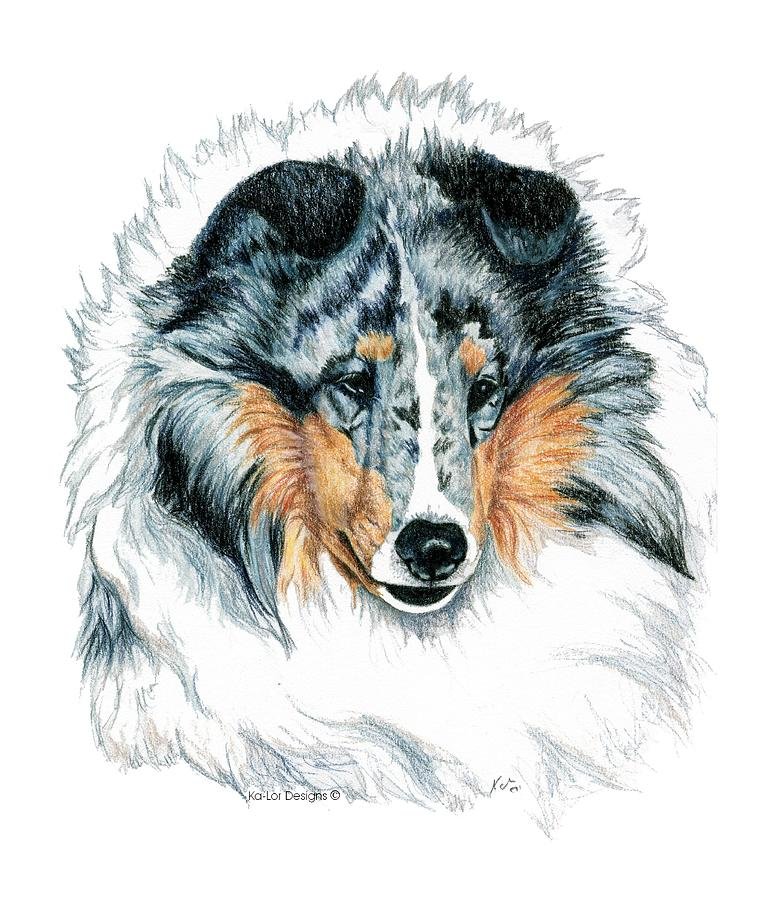 Sheltie Drawing - Shetland Sheepdog, Sheltie, Blue Merle by Kathleen Sepulveda