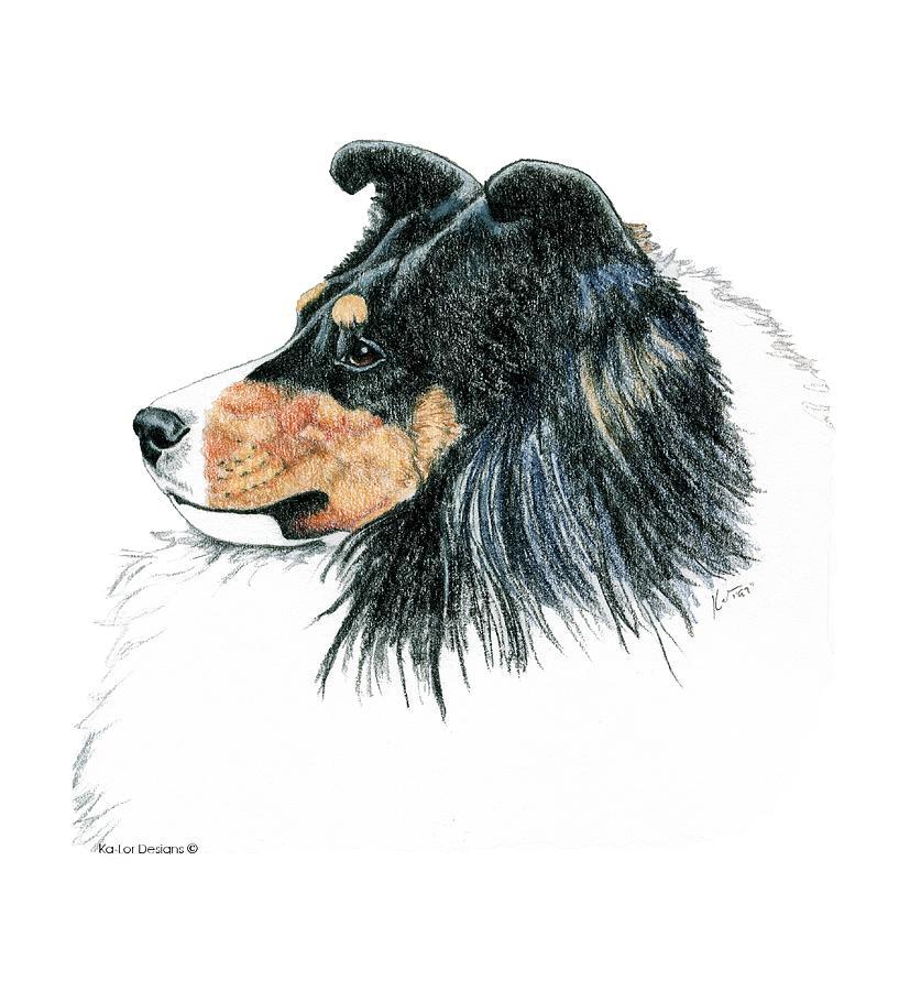 Sheltie Drawing - Shetland Sheepdog, Sheltie Tri Color by Kathleen Sepulveda