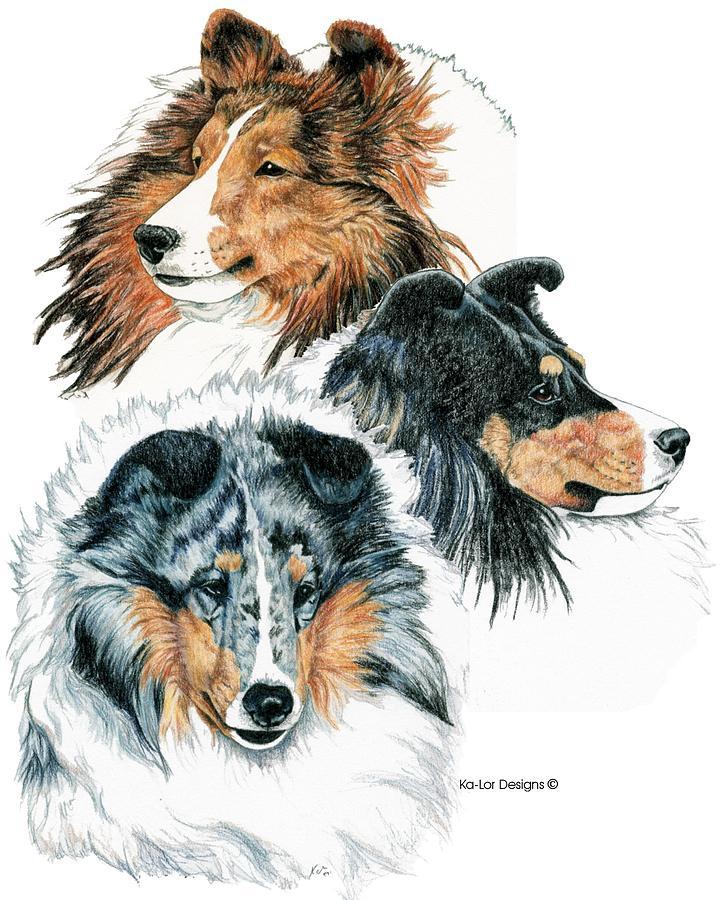 Shetland Sheepdog Drawing - Shetland Sheepdogs by Kathleen Sepulveda