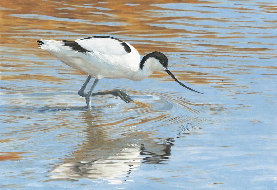 Avocet Painting - Shimmer by Clive Meredith