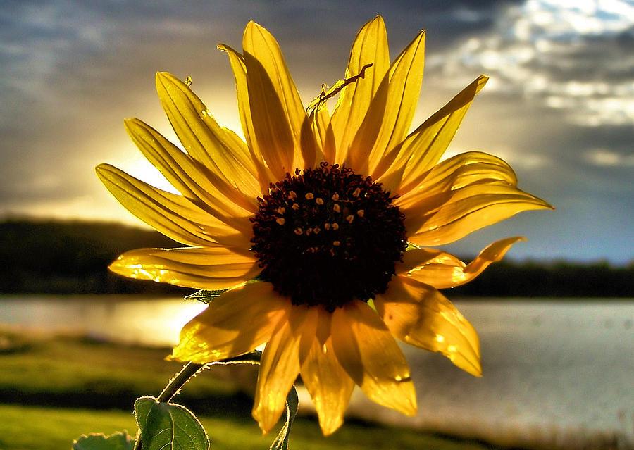 Sun Photograph - Shine Down by Karen M Scovill