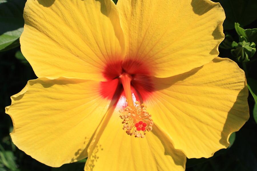 Flower Photograph - Shine by Kristina Randal