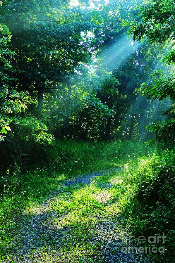 Morning Photograph - Shining Light by Thomas R Fletcher