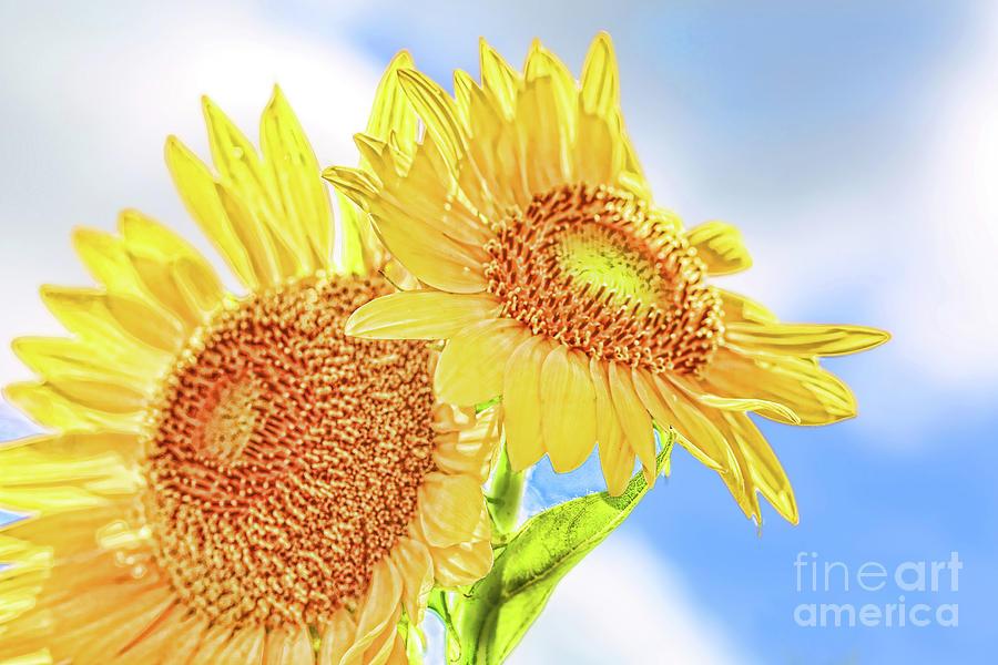 Sunflowers Photograph - Shining Sunflowers by Diana Raquel Sainz