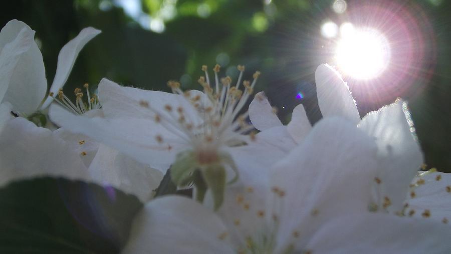 Shining Through Photograph
