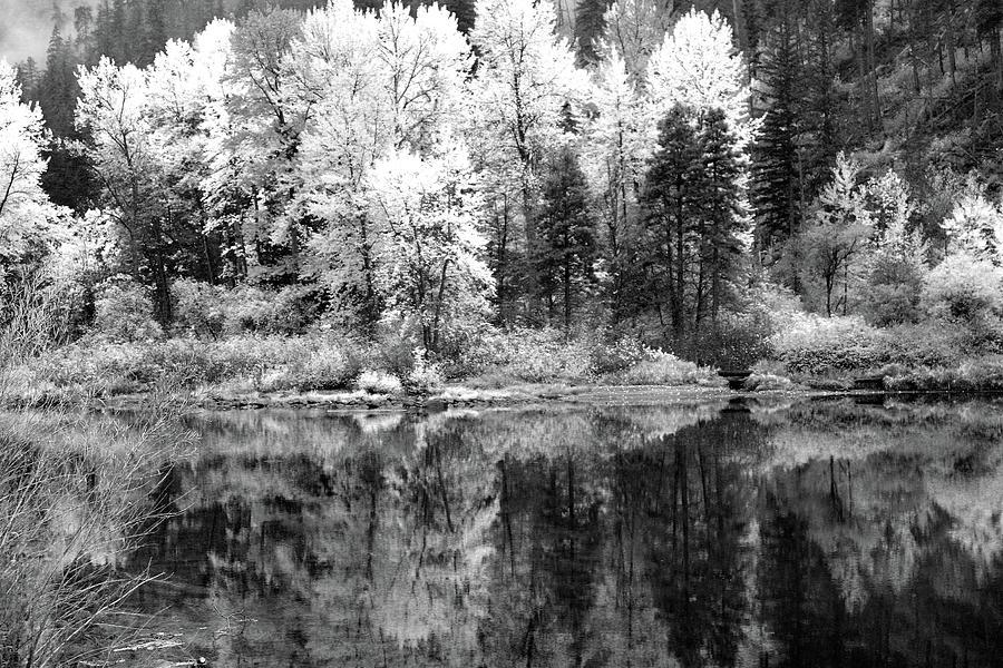 Shining Trees by Jenny Mead