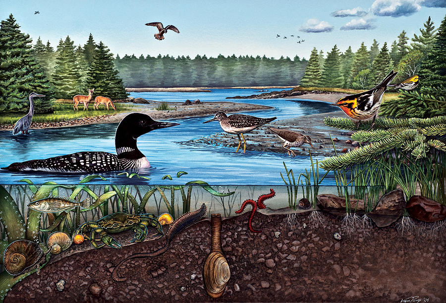 Ecosystem Painting - Ship Harbor Mudflat In Acadia National Park by Logan Parsons