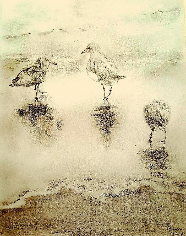 Birds Drawing - Shore Birds At Sunset by Elizabeth La Caille
