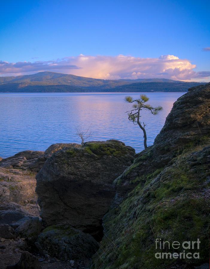 Tree Photograph - Shore Dance by Idaho Scenic Images Linda Lantzy