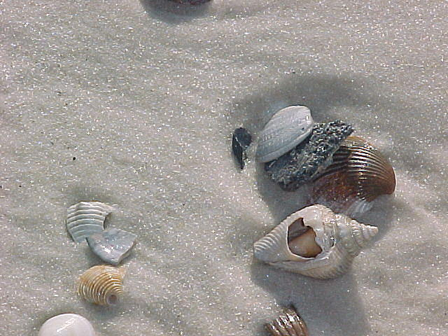 Shells Photograph - Shore Leave by Dennis Pops Tangeman
