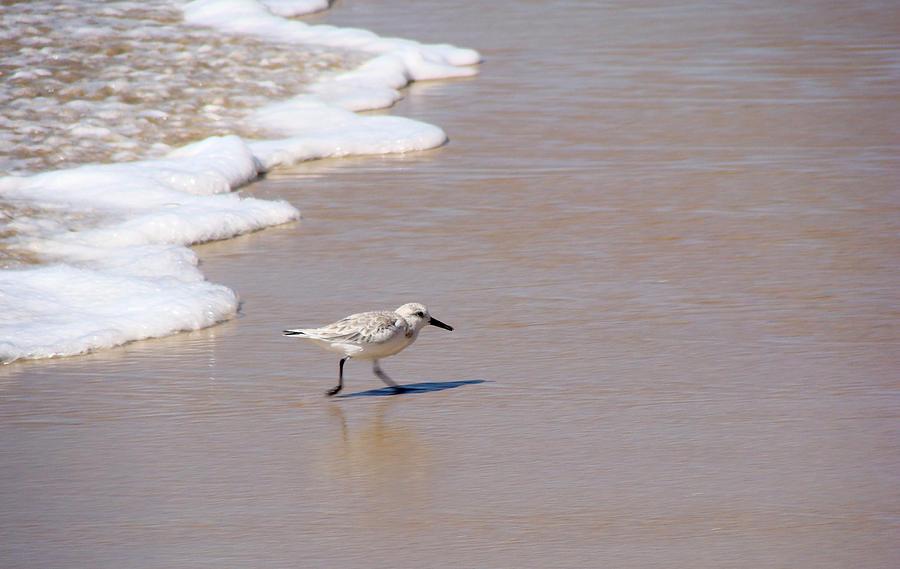 Nature Photograph - Shorebird by Ty Nichols