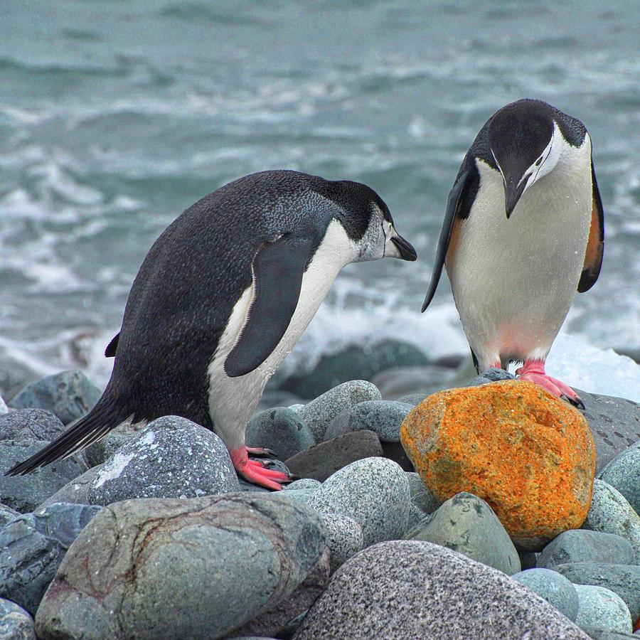Antarctica Photograph - Should We Take It? by Gabriel Jardim