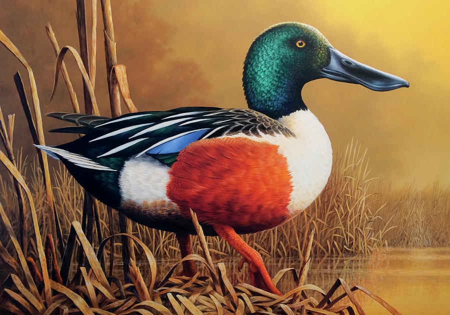 Duck Painting - Shoveler Drake by Guy Crittenden