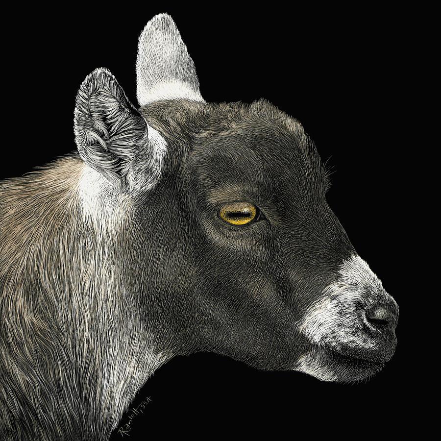 Show Goat by Ann Ranlett
