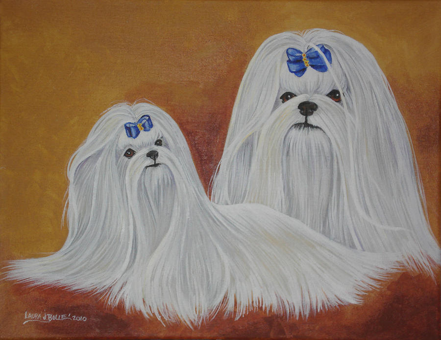 Maltese Painting - Show Maltese by Laura Bolle