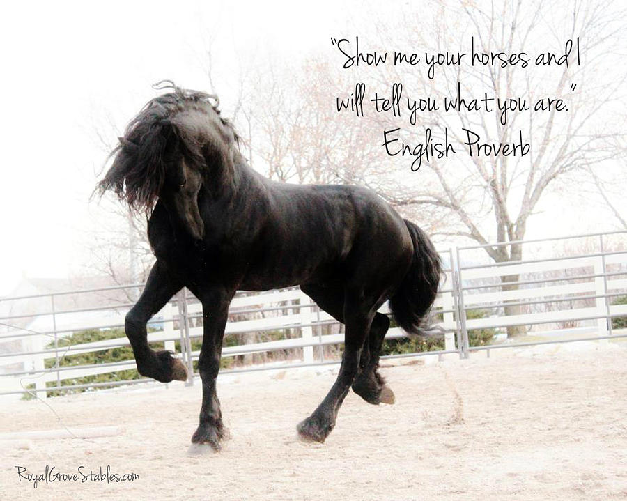 Show Me Your Horse by Carol Whitaker