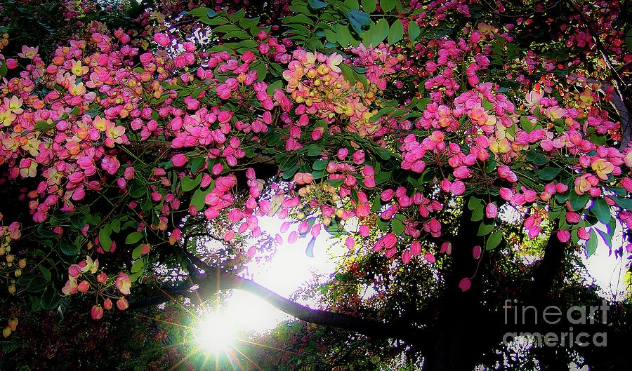 Flowers Photograph - Shower Tree Flowers And Hawaii Sunset by D Davila
