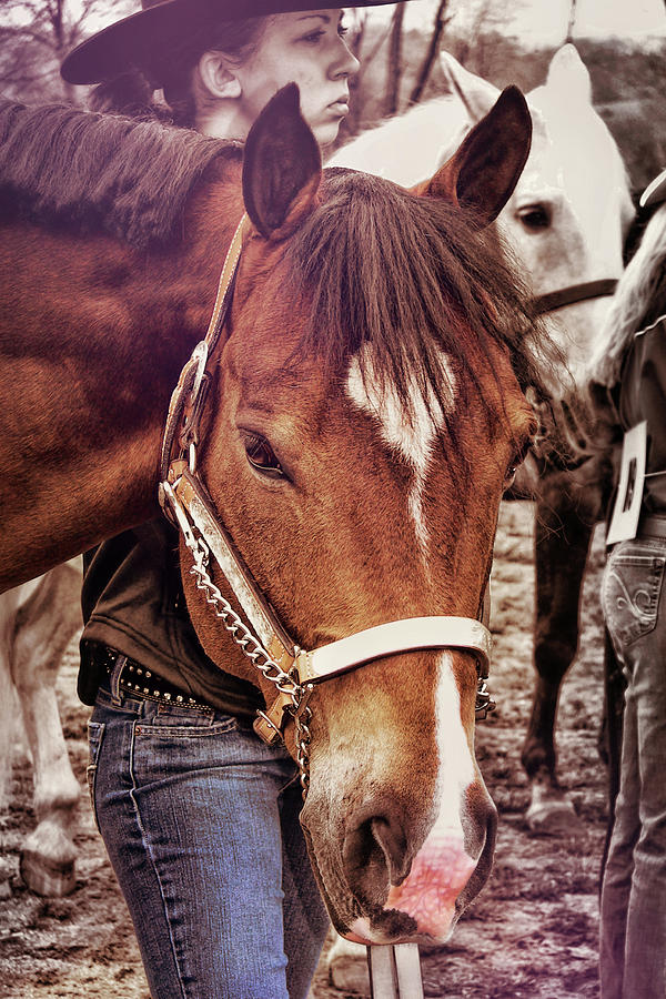 Horse Photograph - Showmanship by JAMART Photography