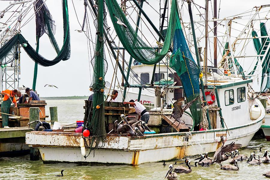 Shrimp Boats A-coming Photograph