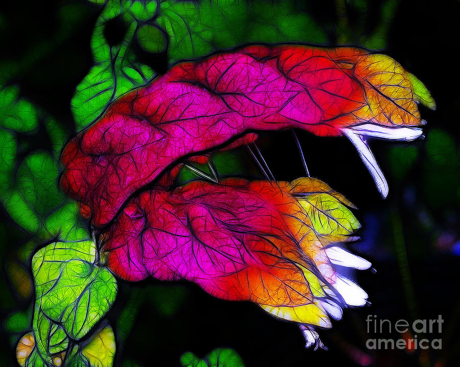Pink Photograph - Shrimp Plant by Judi Bagwell