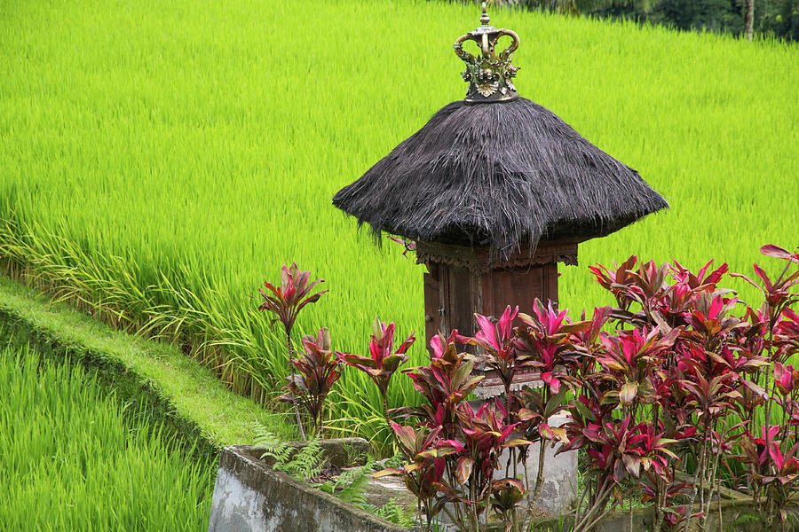 Asia Photograph - Shrine In Rice Field by Emily M Wilson