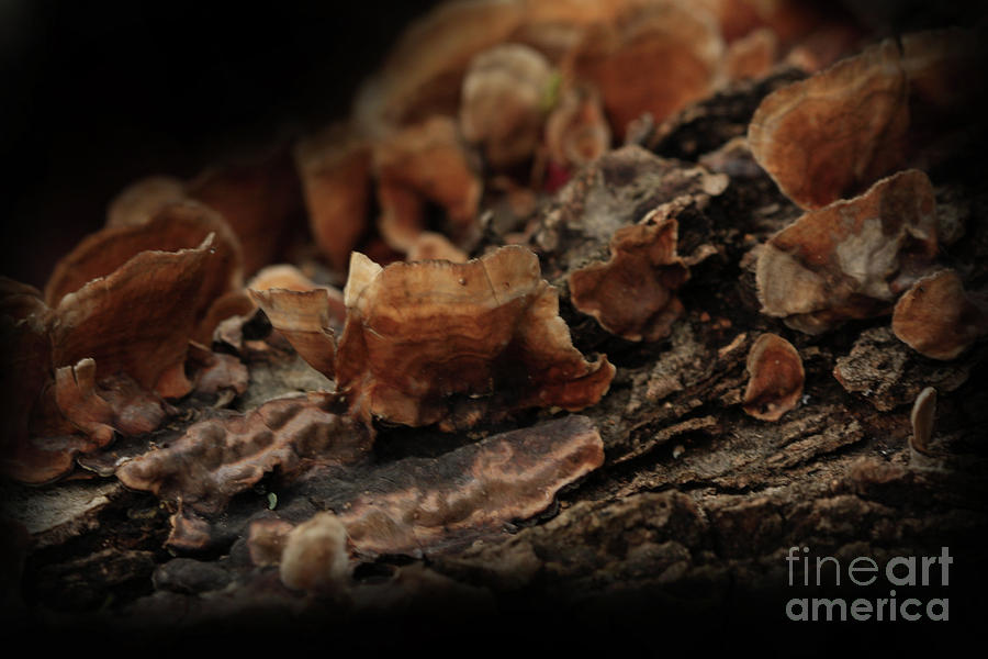 Nature Photography Photograph - Shrooms by Kim Henderson