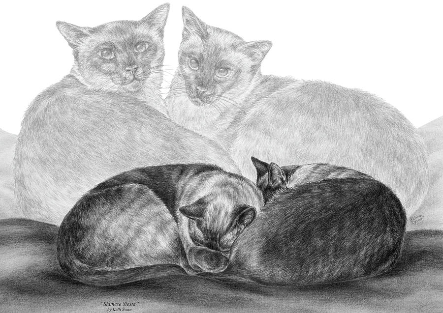 Siamese Drawing - Siamese Cat Siesta by Kelli Swan