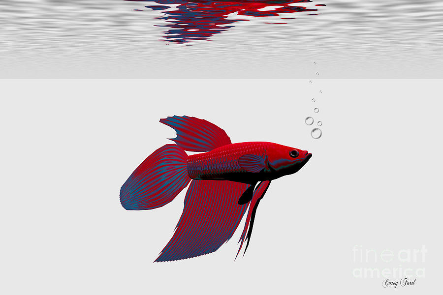 Siamese Fighting Fish Painting - Siamese Fighting Fish by Corey Ford