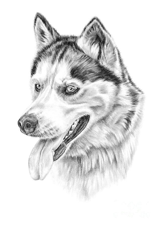 Siberian Husky by Pencil Paws