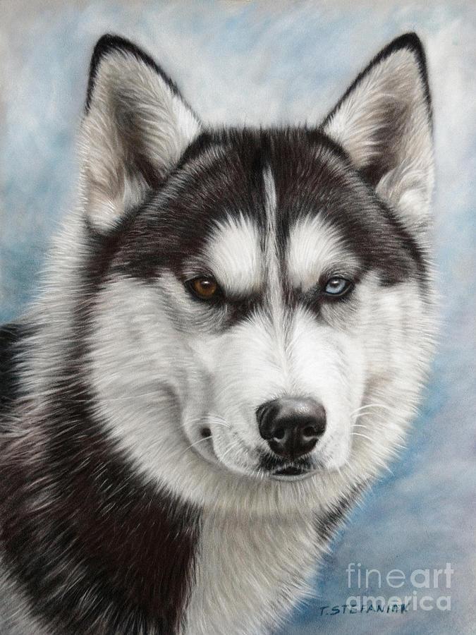Siberian Husky Drawing - Siberian Husky by Tobiasz Stefaniak