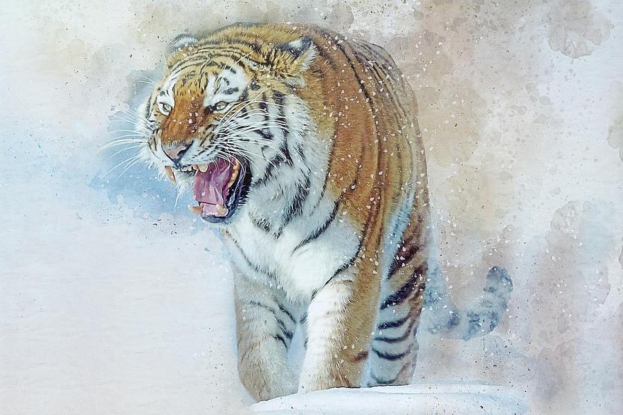 Amur Tiger Digital Art - Siberian Tiger In Snow by Brian Tarr