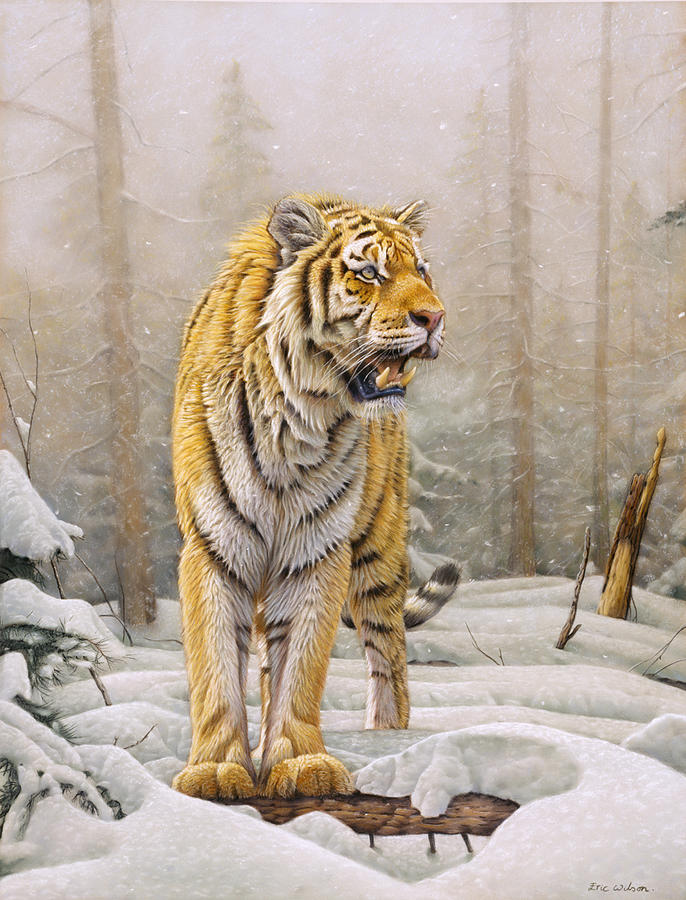 Siberian Tiger Painting - Siberian Tiger In Snow. by Eric Wilson
