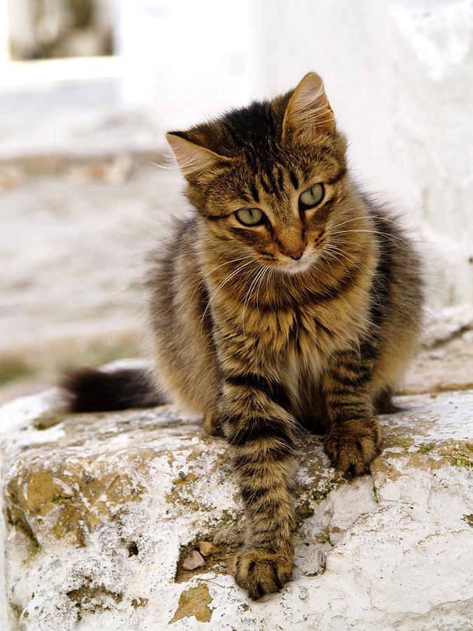Cat Photograph - Sidi Bou Said Tunisia 42 by Per Lidvall