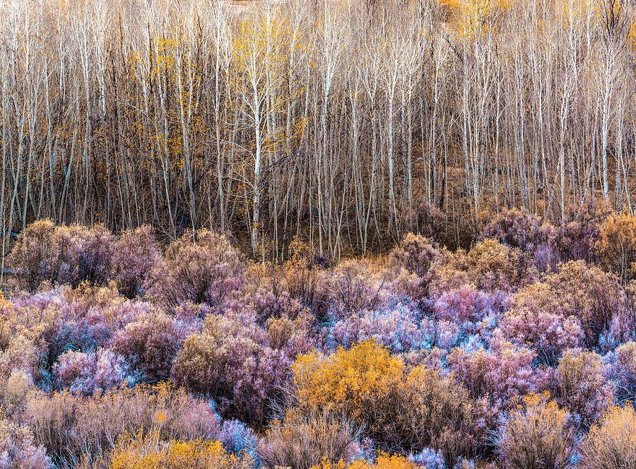 Sierra Grove by Steven Maxx