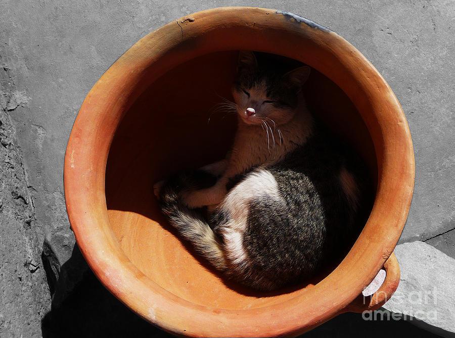 Cat Photograph - Siesta 1 by Xueling Zou