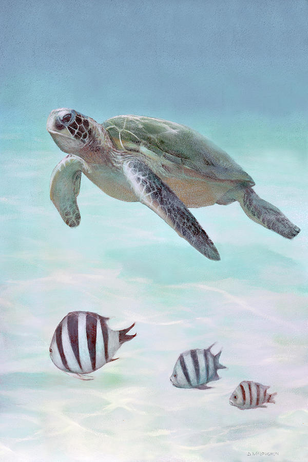 Siesta Key Loggerhead Turtle by Shawn McLoughlin