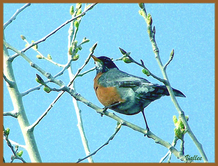 Bird Photograph - Signs Of Spring by Vallee Johnson