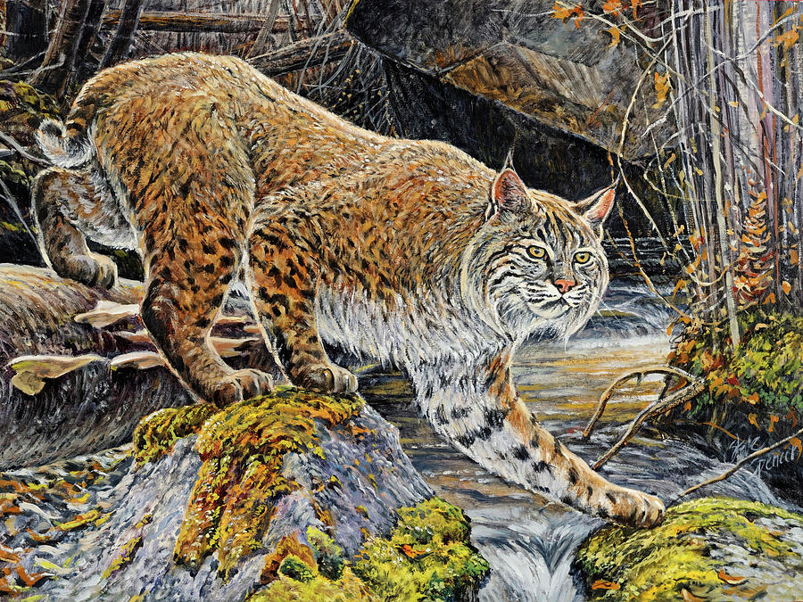 Bobcat Painting - Silent Caution by Steve Spencer