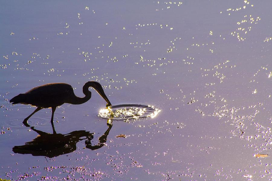 Silent Fishing Photograph by Sam Turgeon