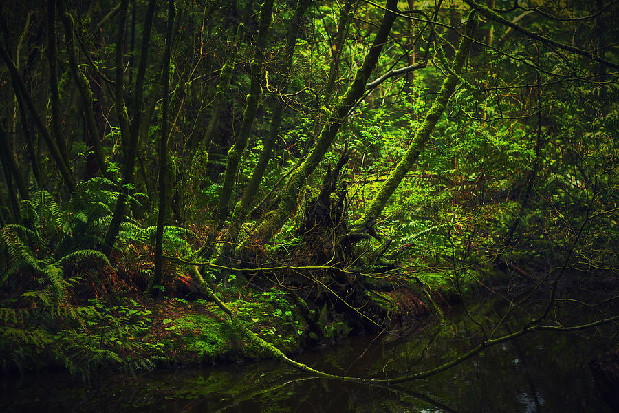 Green Photograph - Silent Forest by Stuart Deacon