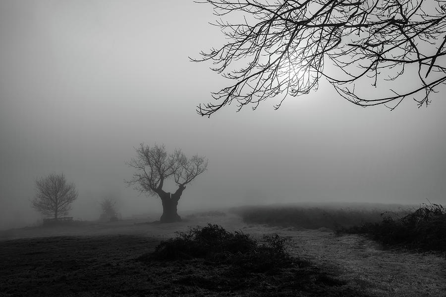 Fog Photograph - Silent Haze by Nick Bywater