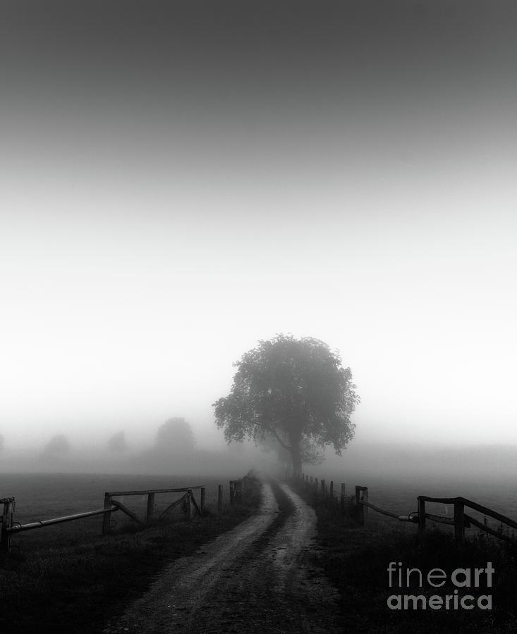 silent morning  by Franziskus Pfleghart