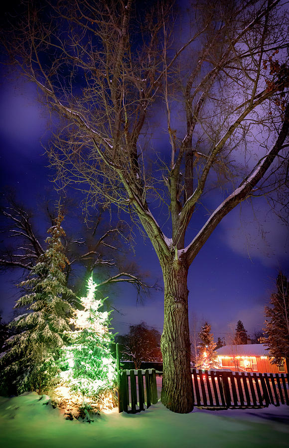 Night Photograph - Silent Night by Cat Connor