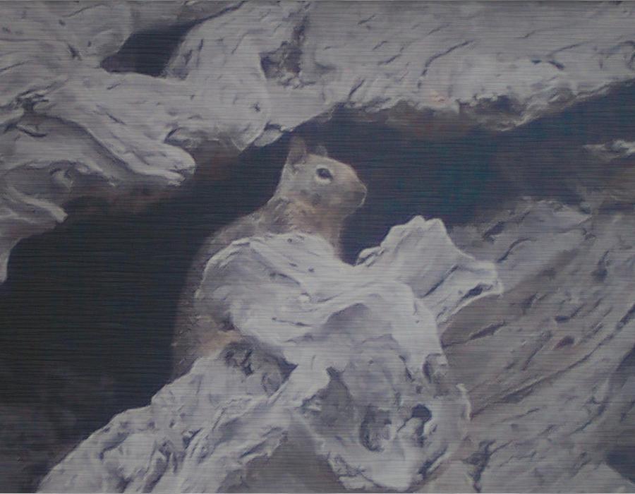 Squirrel Photograph - Silent Observer by Pharris Art