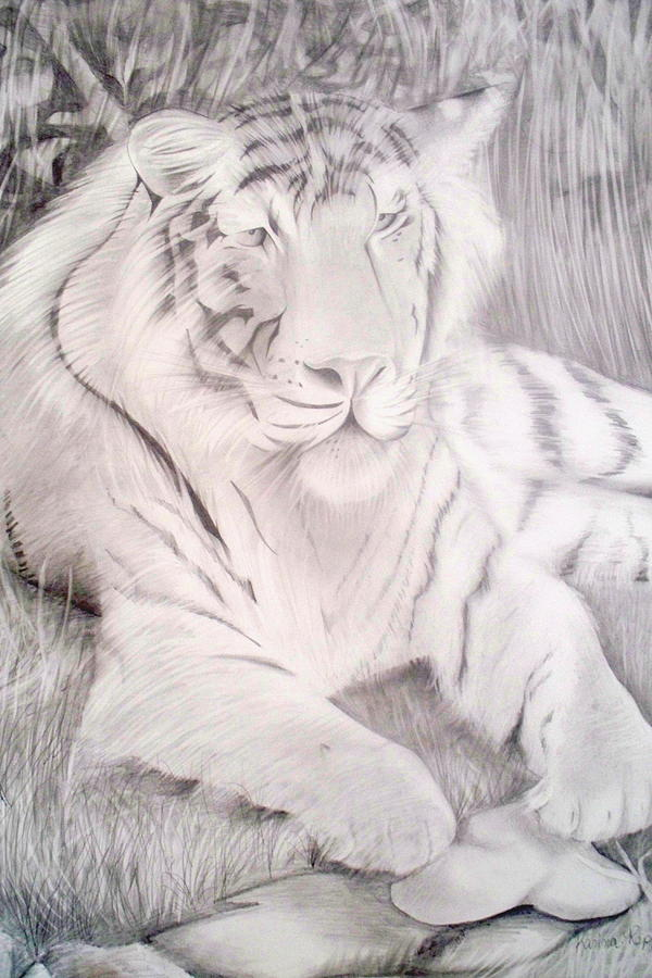 Bengal Tiger Drawing - Silent Predator by Karina Repp