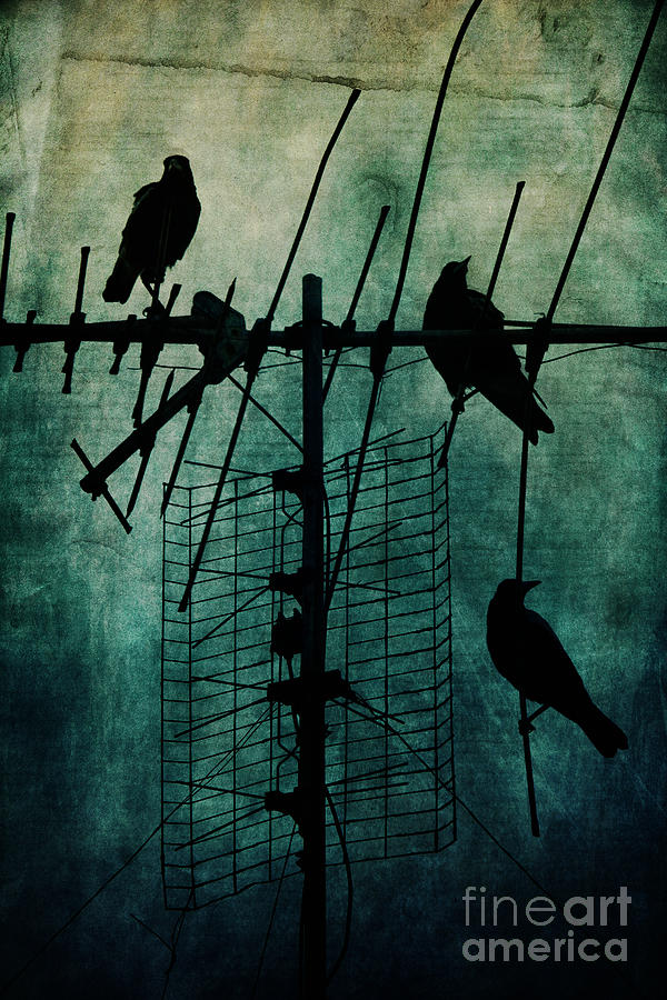 Crows Photograph - Silent Threats by Andrew Paranavitana