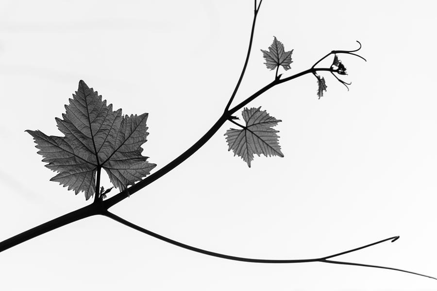 Silhouette Photograph - Silhouette by Daniel Kulinski
